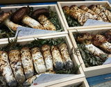 国産松茸セット (開き〜つぼみ) 約150g 2〜6本 岩手県産 すだち付 ※冷蔵