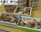 『松茸』岩手県産 約1kg(無選別・多少の折れあり)※冷蔵 1箱ではなく、2〜3箱で届くこともあります