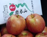 葉とらずりんご『早生ふじ』青森県産 約3kg(7〜15玉入) 岩木山りんご生産出荷組合 産地箱 ※常温