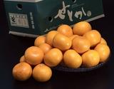 訳あり『せとか』佐賀県産柑橘 約5kg スレ傷あり・サイズ不揃い 産地箱入り ※常温