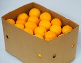業務用バレンシアオレンジ 約15kg(72〜88玉) 小分け袋10枚付き オーストラリア産 ※常温