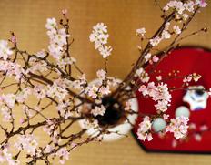 桜を咲かせて、おうちでお花見