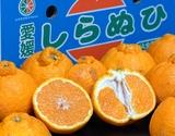 『しもやけしらぬひ』愛媛県三崎産柑橘 M〜3Lサイズ 約5kg×2箱(目安として16〜29玉) ※常温