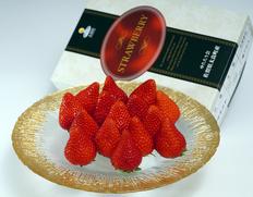 旬のイチゴを市場&産地直送!
