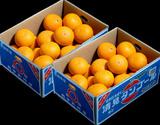 越冬完熟 『清見オレンジ(訳あり)』 愛媛県三崎産柑橘 M〜4Lサイズ 風袋込み 約5kg×2箱 計10kg ※常温