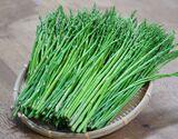 茨城県産 菅谷利男さんの『もったいないアスパラガス』 1本25cm前後 規格外混合 バラ詰め 約1kg ※冷蔵