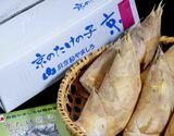 『白子たけのこ』京都山城産 バラ詰め 約2kg +木の芽・糠付き ※冷蔵