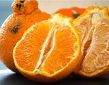 『あらせんデコポン』長崎県産柑橘 約5kg 大〜小サイズ(目安として8〜28玉)キズ、ヤケ、スレあり果 産地箱 ※常温