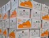 奄美大島『タンカン』  2〜3Lサイズ 約10kg(50玉前後) 産地箱入 ※常温
