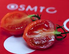 豊洲市場のトマト特集