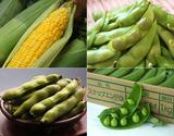 『豆4種セット』(空豆、枝豆、スナップエンドウ、とうもろこし) ※冷蔵 【豊洲市場直送】m