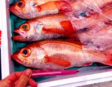 『釣 のどぐろ(赤むつ)』長崎県産 1尾(約350g)※冷蔵 t