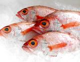 『釣 のどぐろ(赤むつ)』千葉県産 1尾(約850g) ※冷蔵 t