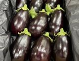 『米茄子』高知県産 約2.5kg(9玉前後) 産地箱 S