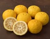 『黄柚子』 高知産 13〜16個 計約1.2kg ※冷蔵 S