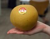 『梨 一糖賞』糖度13.5度以上 新潟県しろね地区 品種:新高 1玉(約700g) ※冷蔵 S
