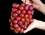 大房ぶどう 『紫苑(しえん)』 岡山県産 2房 計約1.4kg ※常温